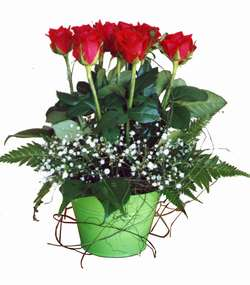 ARRANGEMENT OF SHORT STEMMED ROSES