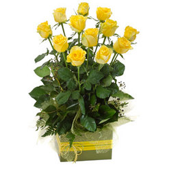 A dozen yellow roses in a box arrangement