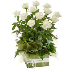 Dozen white roses in a box arrangement.