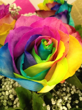 Rainbow rose 6 bouquet flowers bouquets perth for Where can i buy rainbow roses