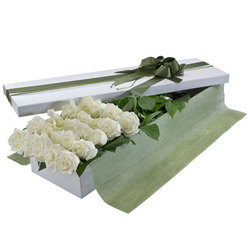 Two Dozen White Rose Presentation Box
