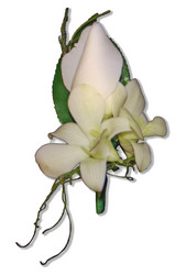 Rose, Orchid and Dodda Vine Buttonhole