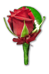 Red Rose Buttonhole with Red Ribbon