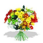 Mixed Chrysanthemums - bright long lasting flowers