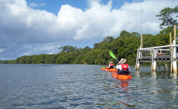 Guided Kayaking 1.5 Hour Eco Adventure Tour only $50 per person.